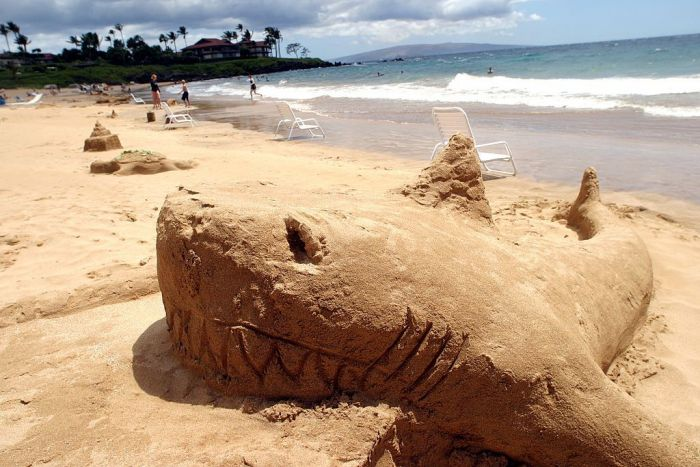 A shark made out of sand on the beach