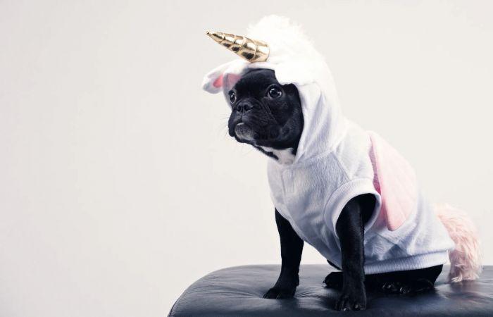 A black bulldog wearing a unicorn costume