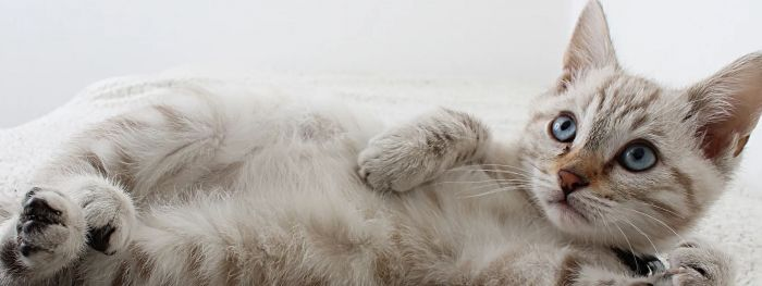 A white kitty laying down