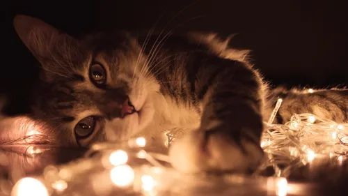 A kitty laying down over fairy lights