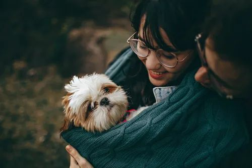 An adorable little dog wrapped up in his owners arms