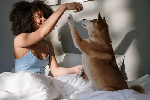 A woman and her dog playing around together in bed