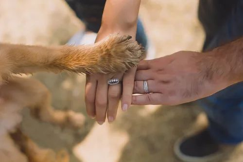 Two rings and a paw together