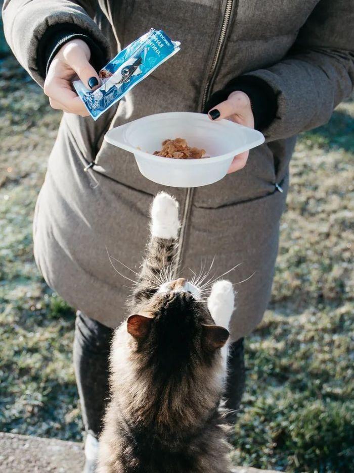 A woman feeding a cat