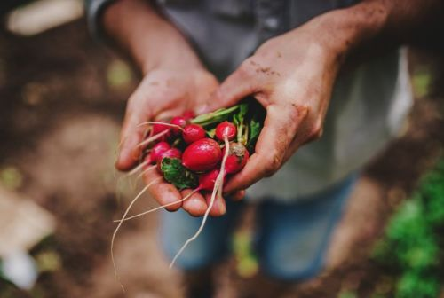 man holding radishes