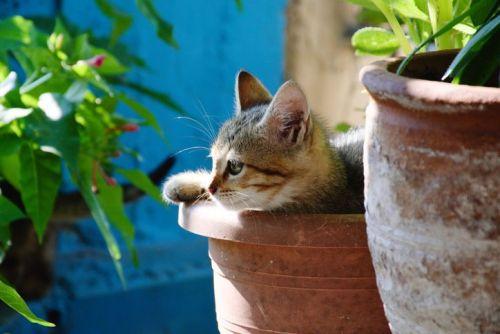 Close-Up of a cat inside a plant pot