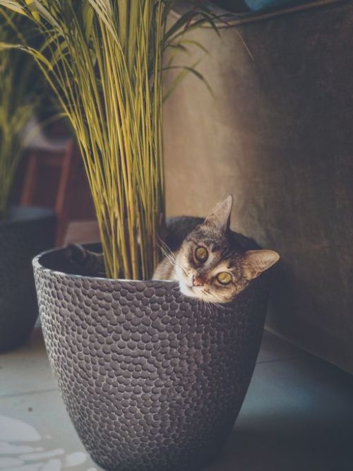 Portrait of cat sitting by potted plant