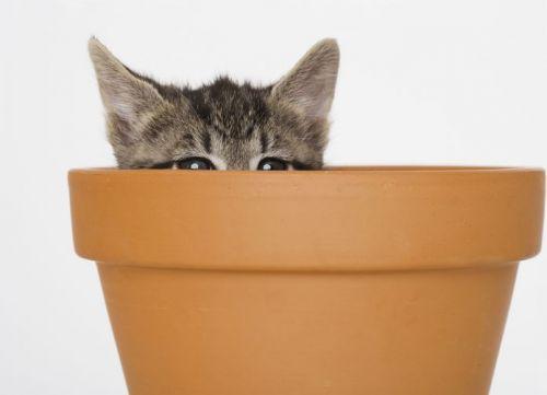 Kitten inside plant pot
