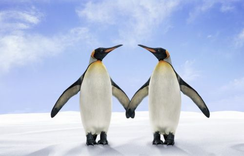 Two King penguins standing on the snow side by side with their wings touching with the sky in the background