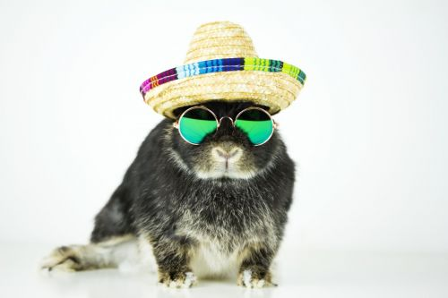 Rabbit wearing sunglasses and straw hat