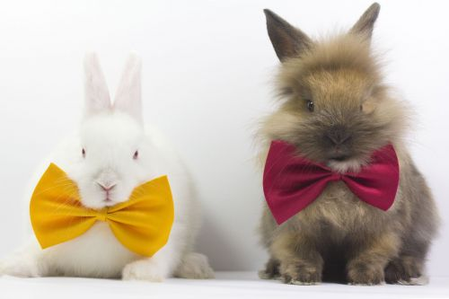 Two rabbits wearing bow ties