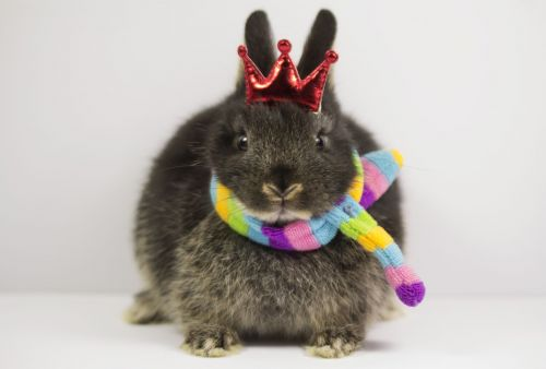 Brown rabbit with a red crown above head