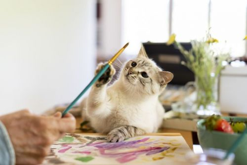 Cute cat reaching paintbrush held by senior man at home
