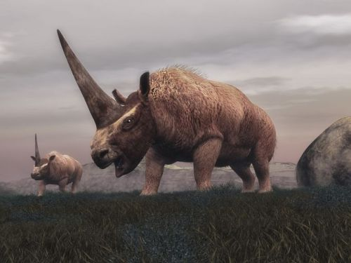 Illustration of two Siberian unicorns on grass