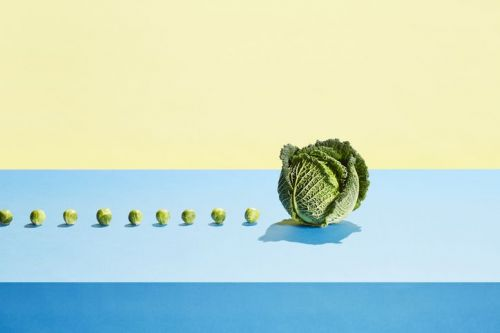 A row of small sprouts following a large cabbage against blue and yellow background