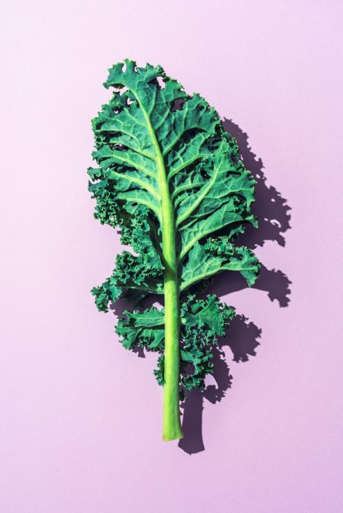 A piece of kale on pink background